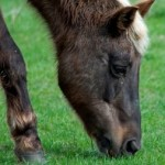 barefoot horse info fb thumbmail